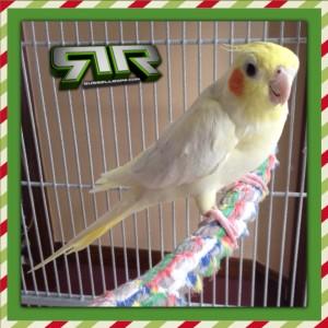 #Free #Birdbrain